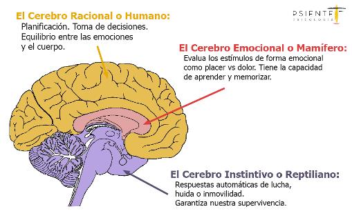 Esquema del cerebro triuno